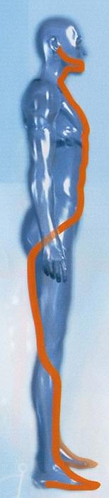Chaîne de flexion